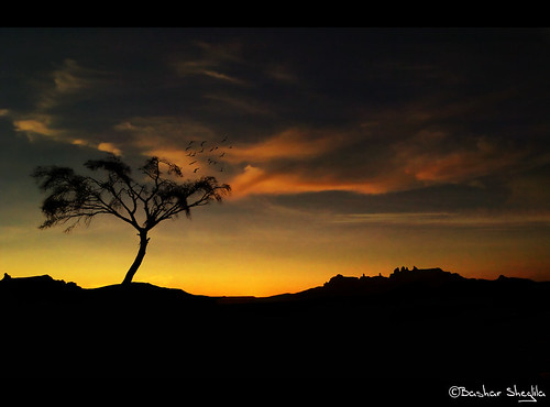 The Lonely Tree of Ténéré ! | by Bashar Shglila
