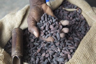 Dried cocoa beans in farmers hand | by Nestlé