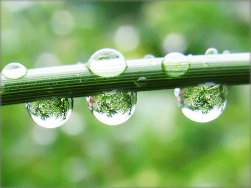 Raindrops with the Refraction of a Green Jungle - Nature in my Garden | by Batikart