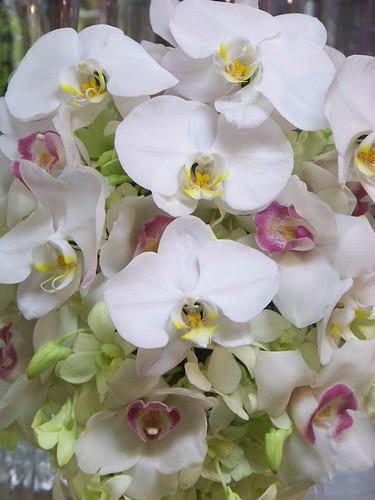 Wedding Flower Arrangements Orchid : Orchid wedding flower arrangements flickr photo sharing