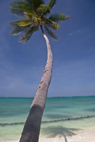 Coconut Palms Beach Resort Deeding