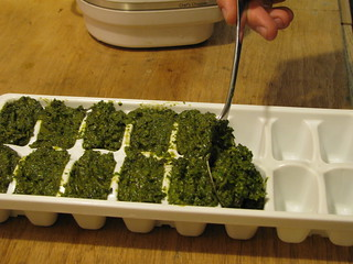 pesto in ice cube tray | by Rachel Tayse