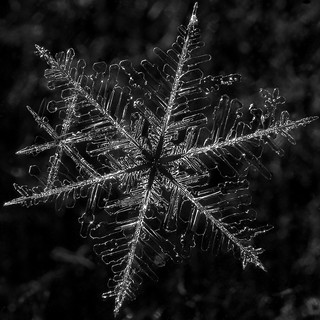 snowflake 1 | by MakuKulden