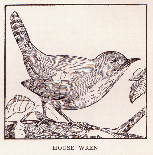 Wren Page 3167 | This copyright free illustration of a ...