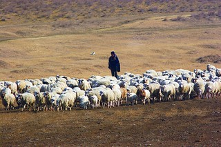 Shepherd, Vashlovani National Park, Georgia | by UNDP in Europe and Central Asia
