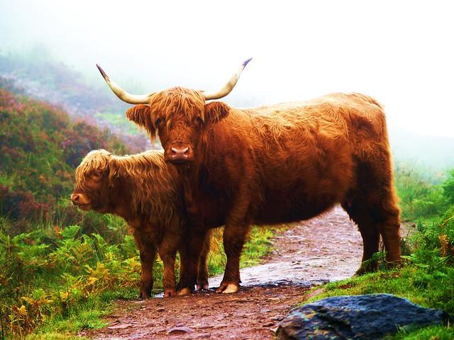 Trail blocker on West Highland Way, Loch Lomond.