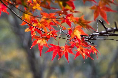 紅葉狩り - 東山公園 11