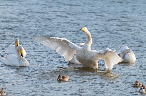 翼をひろげて 3