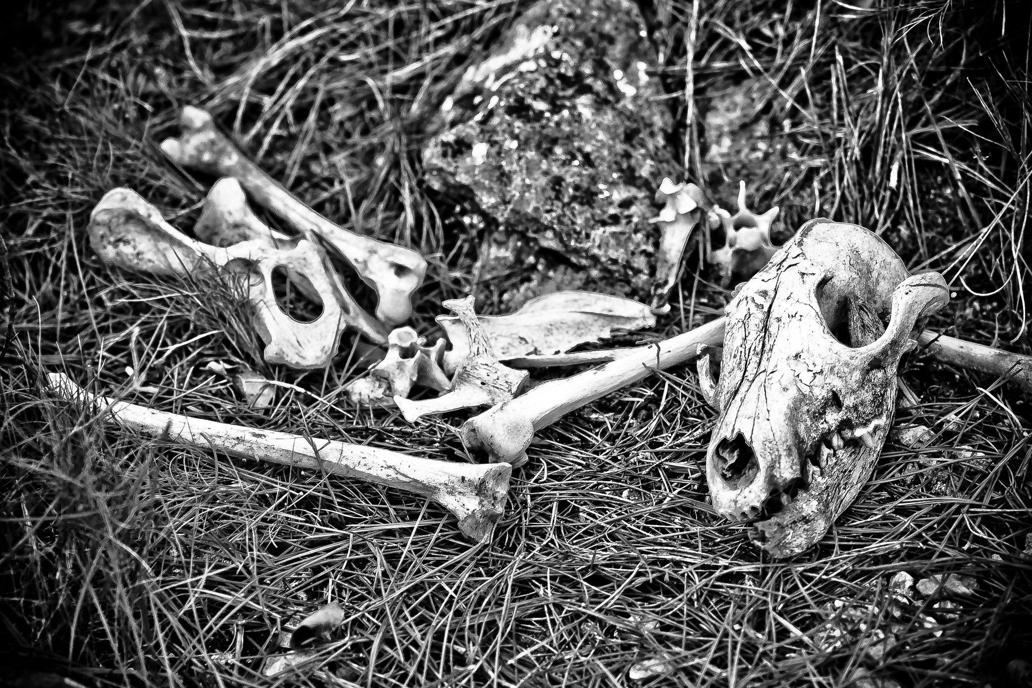 Black and Die