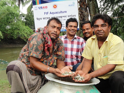 Farmers with fish fry at Faridpur, Bangladesh. Photo by Kamruzzaman, 2013.