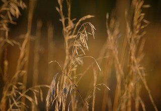 Prairie bokeh, part 2 | by Leslie Vernon