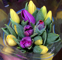 tulips for Easter | by Per Ola Wiberg ~ powi