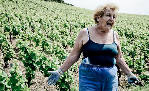 Lady & Her Vines - Verzy Champagne 2011 | by The Hungry Cyclist