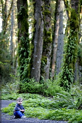 we're admiring the trillium flowers, he's admiring the trailside gravel - _MG_1102 | by sean dreilinger