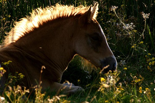 Foal Silhouette | by paulinuk99999 - just no time :(