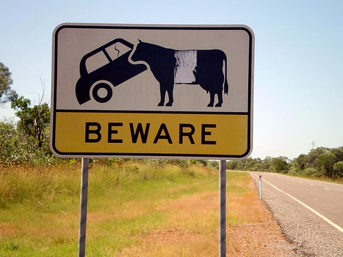 Beware of the Cow | by tm-tm
