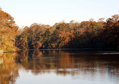 Fall colors on the Pocomoke River | by D. C. Glovier
