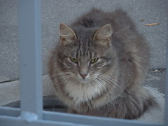 Kazan Cathedral - Russian kitty