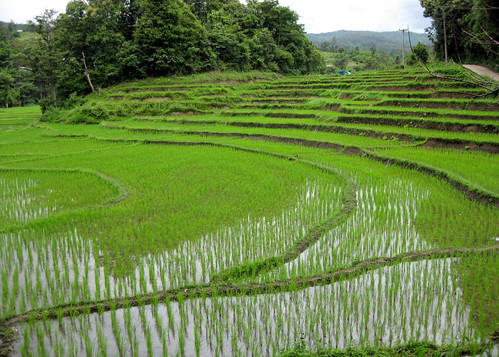 Rice fields | by echiner1