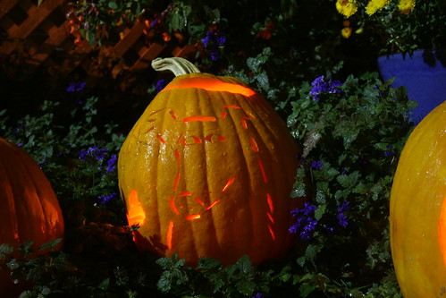 Ted's Kelly Collie Pumpkin | by Randy Brock