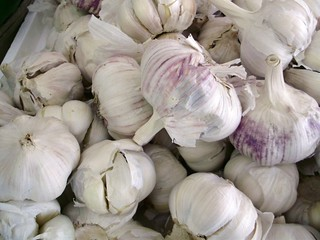 Garlic | by Mullica