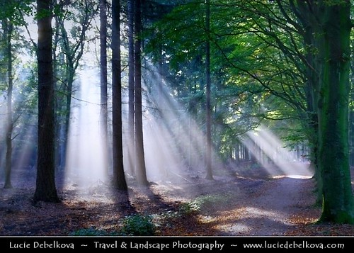 Netherlands - Magic Light in Lage Vuursche Forest | by © Lucie Debelkova / www.luciedebelkova.com