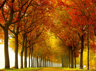 So Full | by larsvandegoor.com