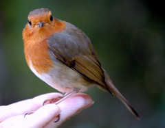 robin on my wife hand at the park | by coral.hen4800