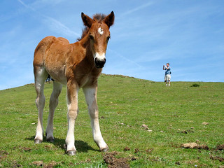 The Foal and my Son in Spain - Distorted Proportions | by Batikart