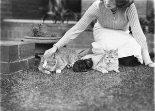 Girl with two cats and a kitten, Sydney, 1930s / Sam Hood | by State Library of New South Wales collection