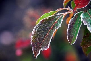 Early Frost | by nhpe1