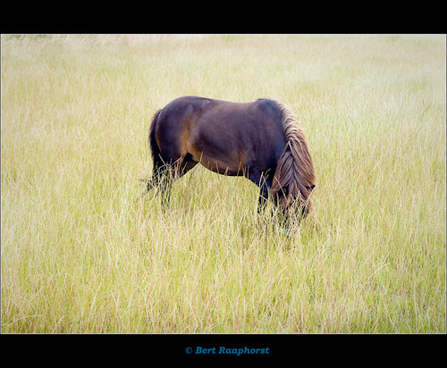 """Horses make a landscape look beautiful .."" & Alice Walker 