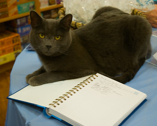 Guestbook Cat wants your signature | by pjern