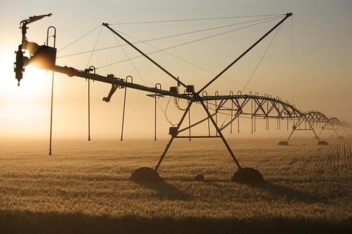 irrigation at dawn | by Chris Happel