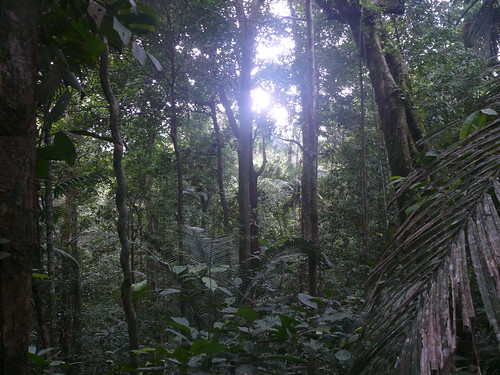Siberut forest | by East Asia & Pacific on the rise - Blog
