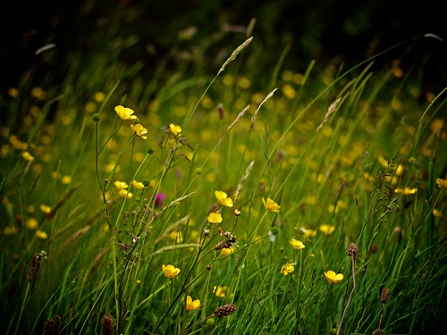 Field | by Maggie's Camera
