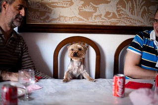 Dog at the table, Madrid | by Sapient Iguana