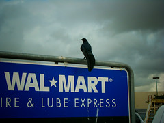 Pose For Me Walmart Bird | by lemonfilmblog