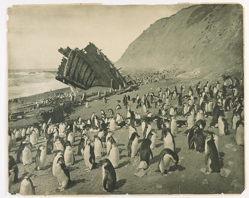 Wreck of the 'Gratitude', Macquarie Island, 1911 | by State Library of New South Wales collection