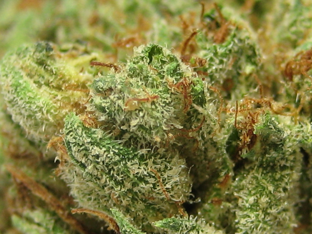 og kush strain review | GreenRush Cannabis Delivery