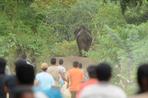 Returning a Sumatran elephant to the forest | by East Asia & Pacific on the rise - Blog