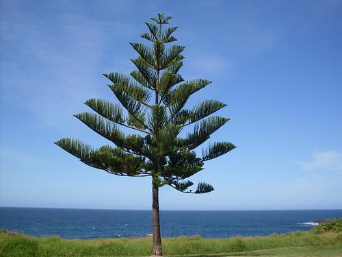 N Pine Island Rd Plantation Fl