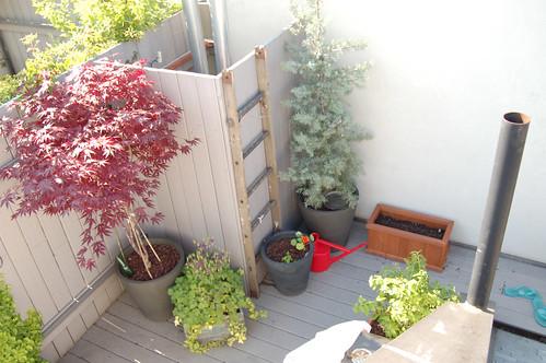 Garden on Memorial Day 2009- 2
