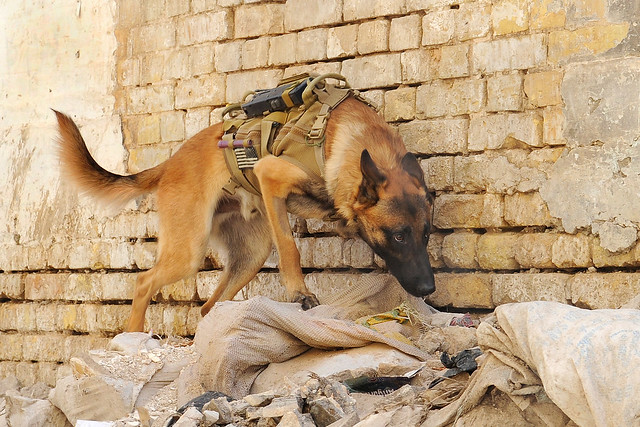 Military Dogs are Heroes : Military Working Dogs