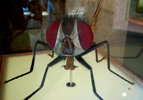 Giant Housefly Model | by Curious Expeditions