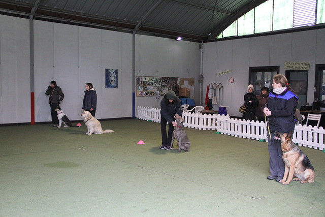 Rally Obedience 1 novembre 2012