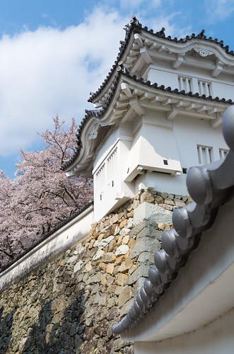 龍野城の桜 3