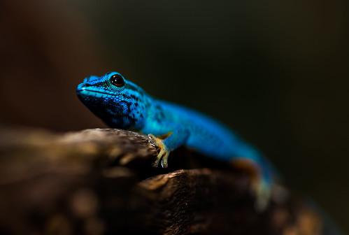Blue lizard michael hofer flickr for Michael hofer