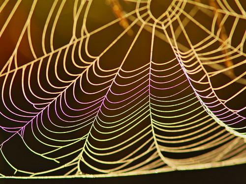 Silk and dew rainbow 20131224
