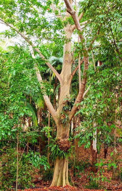 Australian Plant Communities Trail - Brisbane Botanic Gardens Mt Coot-tha